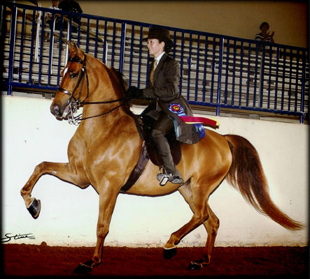 Austin Texas Arabian English pleasure horse trainer